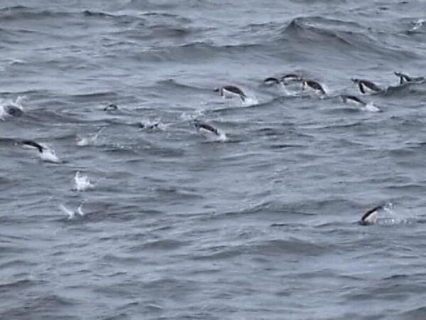 Пингвины у берегов Антарктиды