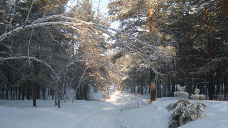 Зима в сосновом бору