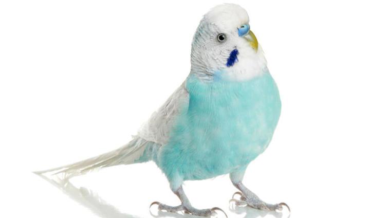 Как искупать попугая?
