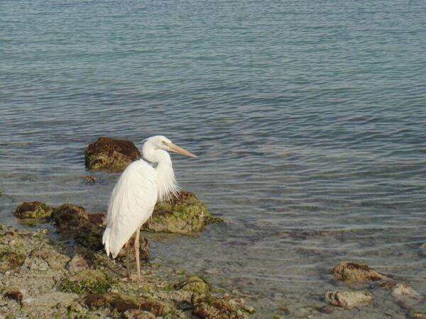 Флорида-кис – дом для сотнен видов птиц