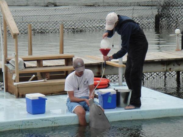Витамины иногда нужны даже дельфинам