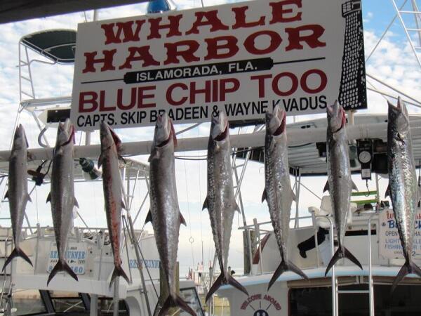 Исламорада – негласная мировая столица спортивного рыболовства