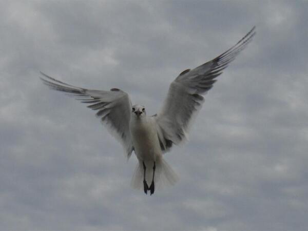 Диких птиц здесь можно кормить с руки