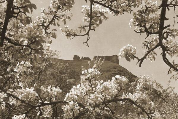 Старинная фотография горы Боны