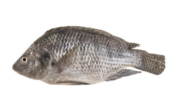 Какой рыбой Иисус Христос пять тысяч голодных накормил?