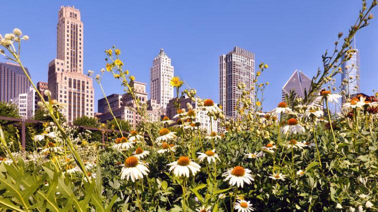 Зачем в городе огород городить? Урбанистическая деревня Чикаго