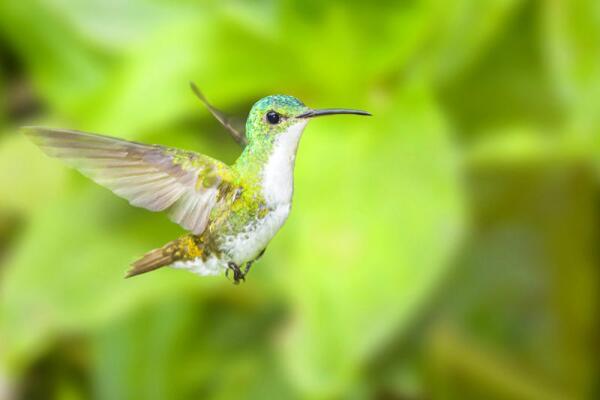 Самые маленькие птицы – какие они?