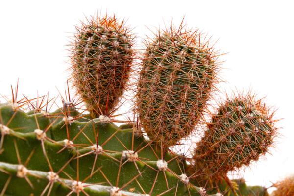 Какие комнатные растения приносят материальное благополучие? Поверья и приметы