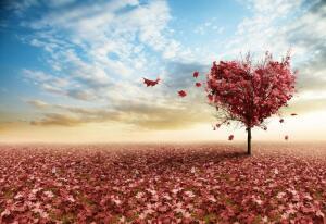В чем главное заблуждение любви?
