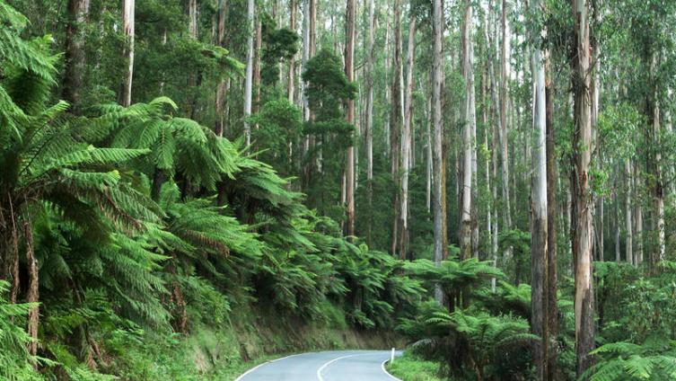Самые большие в мире деревья - какие они?