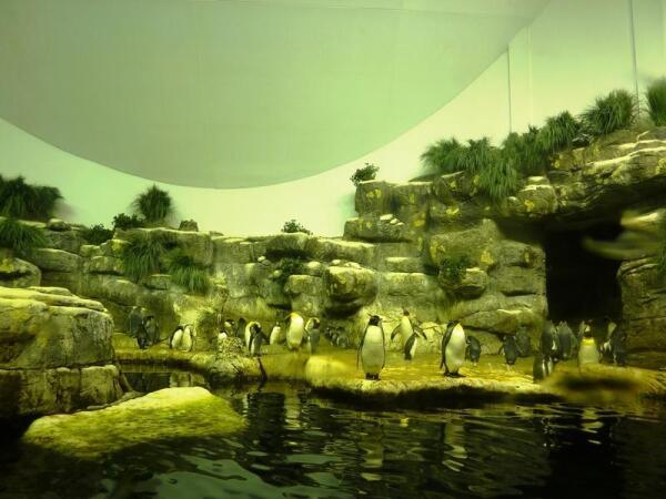 Мир пингвинов