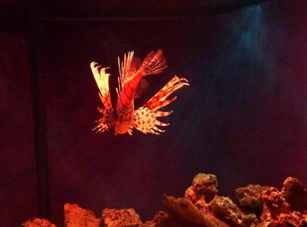 Рыба-цветок