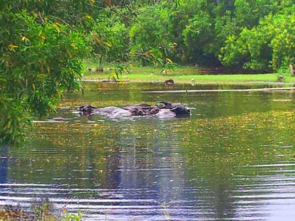 Водно-болотистые объекты - убежище для животных