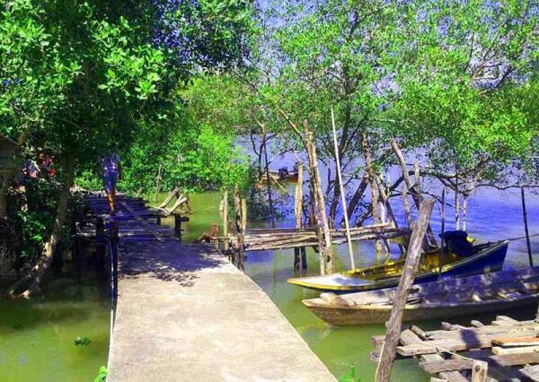 Мангровые деревья - среда обитания рыб, а в тропиках - и крокодилов