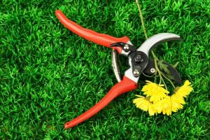Инструменты для садовых деревьев? Хорошие и нужные!