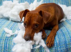 У вас появился щенок? Обустраиваем нового члена семьи! Часть 2