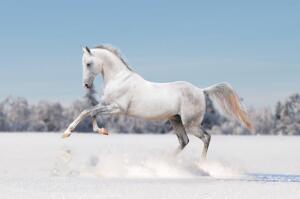 Аргамак: откуда родом конь небесный?