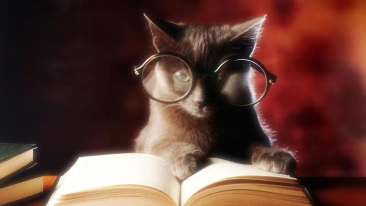 День кошек в России. Какие «кошачьи» словосочетания нам известны?