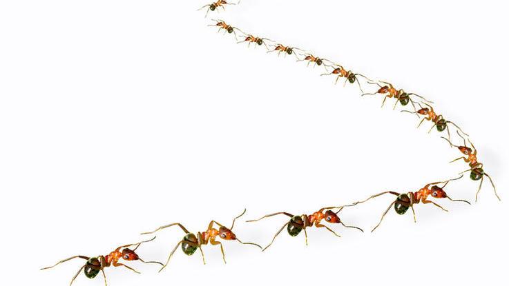 Как избавиться от муравьёв?