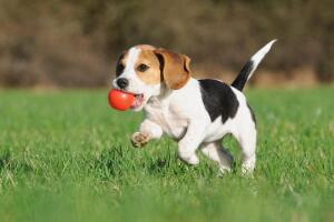 Какие игрушки купить для щенка? Четыре идеи для собачьего счастья