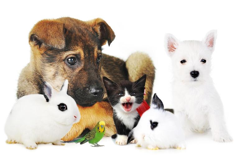 К чему снятся животные кошки и собаки