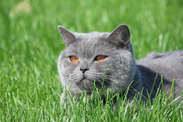 Какие растения опасны для кошки?