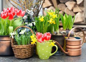 Бывают ли цветы опасны?