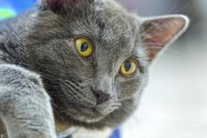 Кошки знакомые и незнакомые. Что мы о них не знаем?