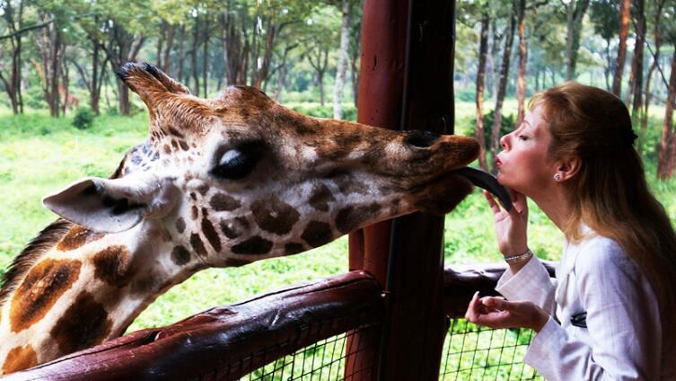 Любят ли жирафы целоваться?