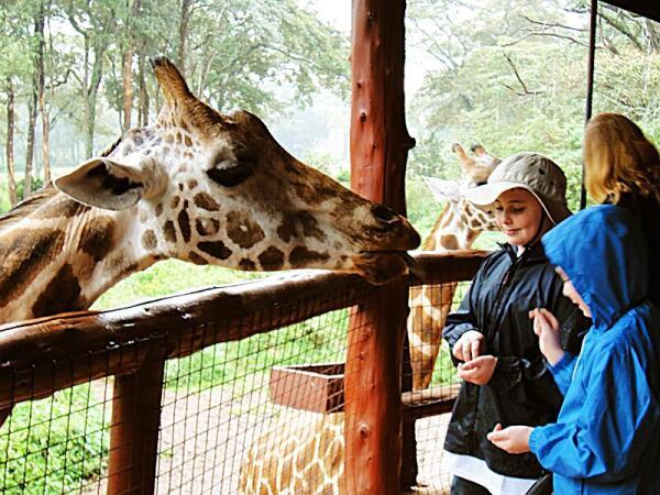 Как и многие другие животные, жирафы больше доверяют детям