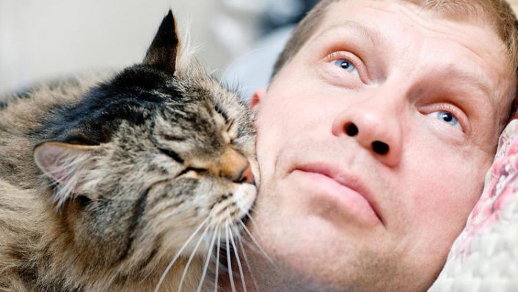 Как научиться понимать свою кошку?