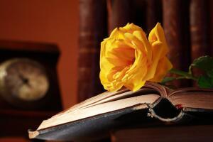 «Чего не достаетъ для хорошаго воспитанiя?» На каких примерах воспитывали наших прабабушек