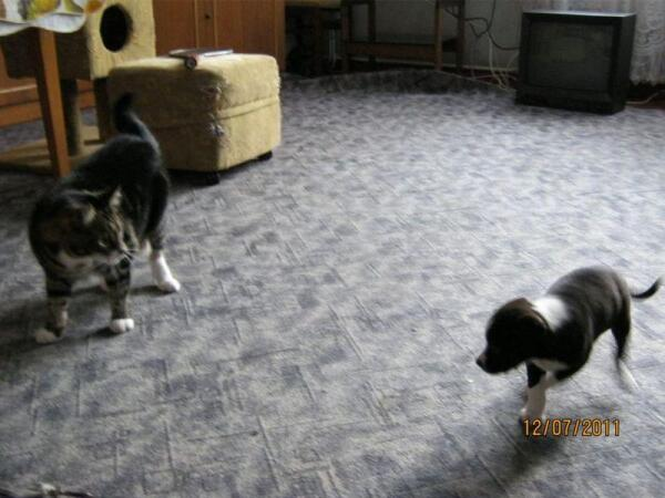 Кот и собака в одном телефоне