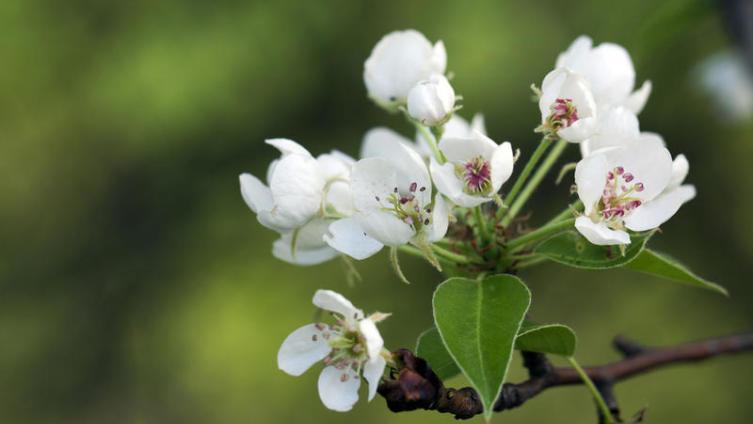 Как ухаживать за садом? Секреты садоводов