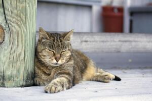 Каких кошек любил Эрнест Хемингуэй?