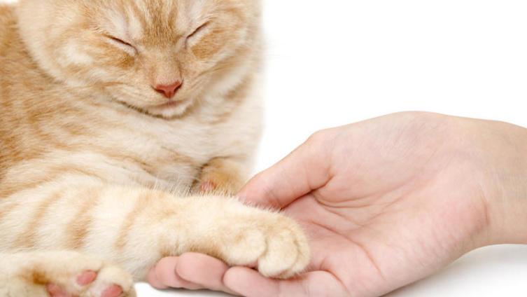 Зачем нужны кошки?