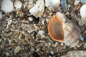 Как избежать отита при купании в море?