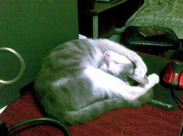 Не мешайте, я сплю!