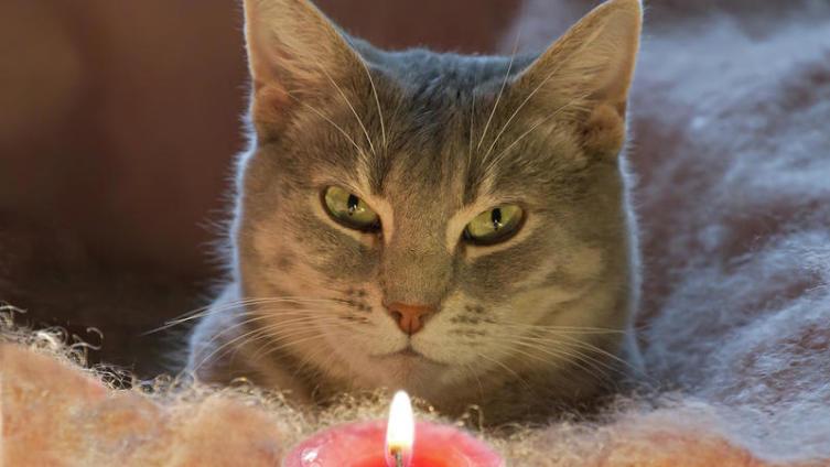 Как кошки воспринимают окружающий мир?