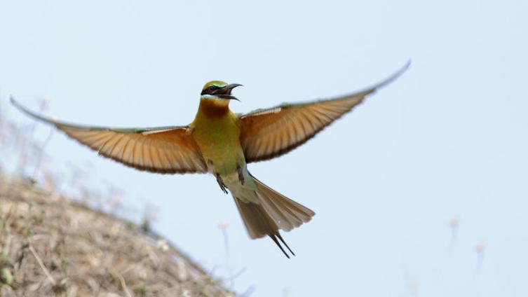 Национальный парк Яла: вы готовы к встрече с дикой природой?