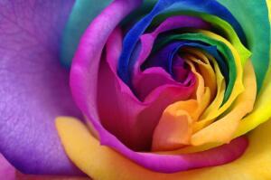 Интересна ли экскурсия в мир цветов?
