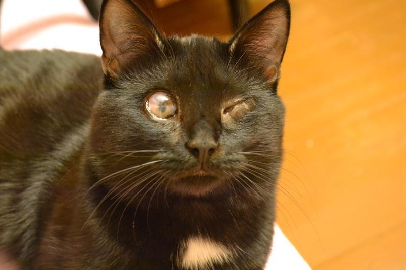 Советы про кошек - Все о котятах