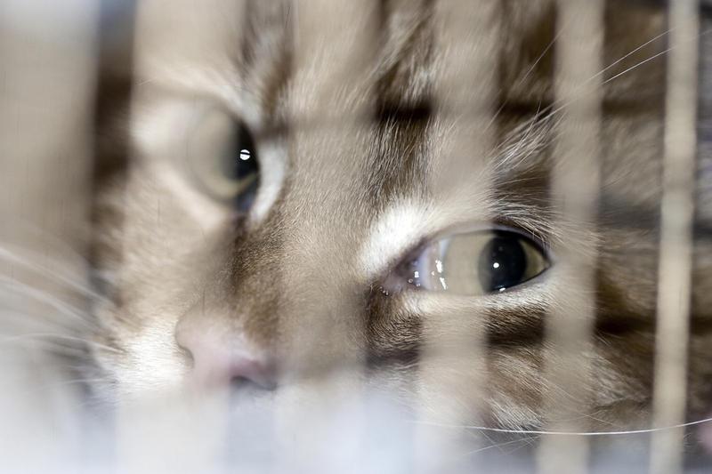 Кот из приюта. Стоит ли присматриваться к «проблемным»?