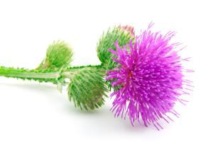 Чем полезно для волос репейное масло?