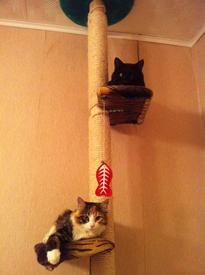 На таком дереве кошки играют у родителей