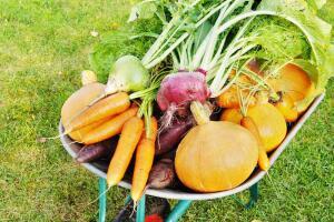 Как легко и просто получить урожай на огороде?
