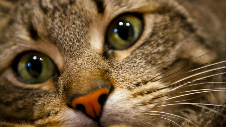Как сделать игрушки для кошки самостоятельно?
