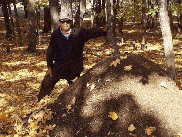 Касим-агай у самого большого муравейника
