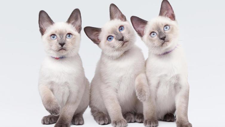 Кот или кошка? Определяемся с выбором