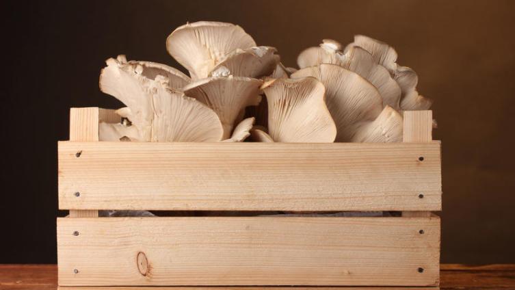 Чем полезны грибы вешенки? Даешь рост демографии!